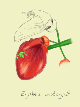 Botanical Illustration 1 by NoidEXE