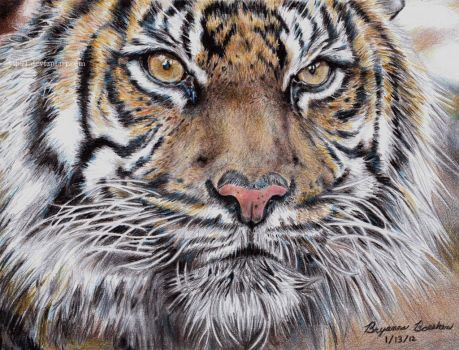 Tiger by ArtByBryanna