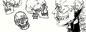 Thoughtless Skull Drawings by ghoulique
