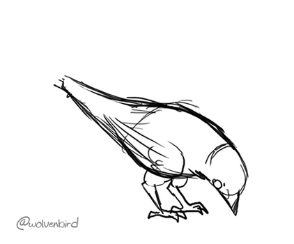 Robin animation practice by WolvenBird