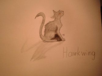Hawkwing - Warrior cats by Winter-Sky529