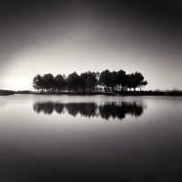 Reflecting Trees by DenisOlivier
