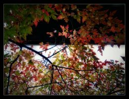 Autumn. ...44 by gintautegitte69