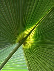 Tropical Green by cg2i