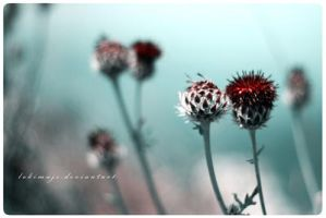 Red Flower by LokiMuje by Ro-nature