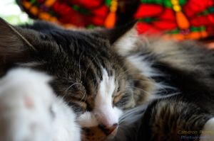 Stained Glass Sleepy Cat by GarfieldP