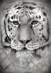Tiger by nor-renee
