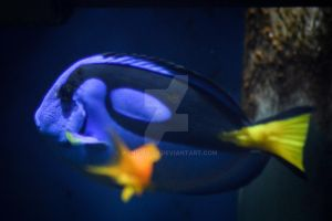 Dory by WendiJo129