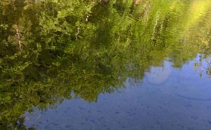 Reflection in the creek by seianti