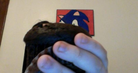 look what i got flash it a chocolate muffin c: by BluethornWolf