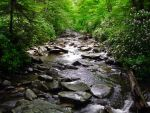 Small Stream in Tennessee by TheUkrainian1