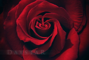 Swirls of passion by Daystar-Art