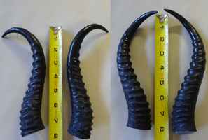 Springbok Horns by DreamVisionCreations