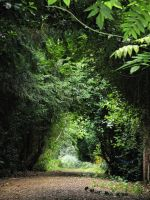 natural tunnel 2 by Its-Only-Stock