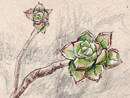 Succulent Drawing by KingVahagn