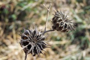 Seed Pods by anonymoose1