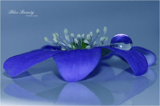Blue Beauty by ninazdesign