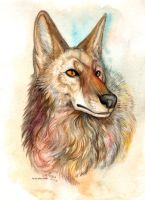 Coyote by Kiriska
