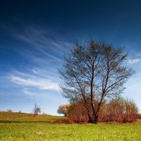 behind of the tree by iustyn