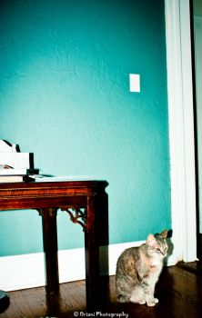 Cat Series 1 of 3 by OrianiPhotography