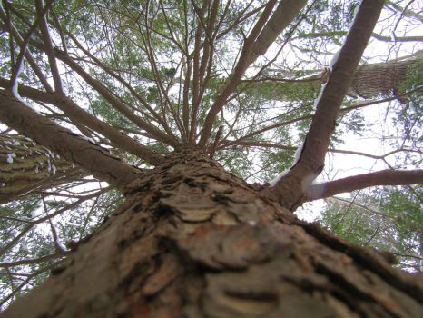 Looking up a tree by Beaglesx2