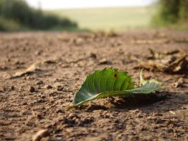 Leaf on the road 2 by wojtekmaj