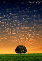 The Lonely Tree - Revisited by IsacGoulart