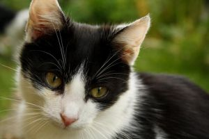 black and white cat by Borderkowa