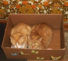 A boxful of brotherly love (1) by MystMoonstruck