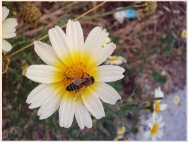 bee by pungen