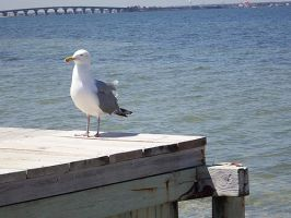 Gull on the Bulkhead by Butterscotch25