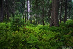In the forest by yonashek