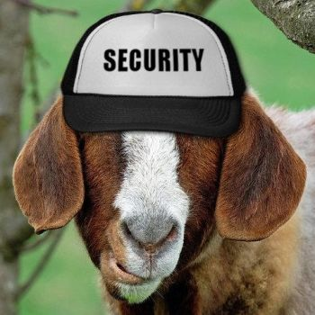 Security Goat by norbert79