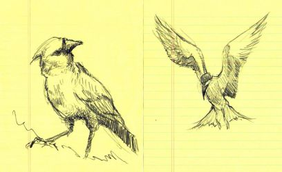 Bird Study V and VI by timbroadwater