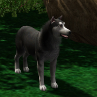 Sims 3 Gray Wolf by Hollena