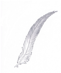 feather by mkl2000
