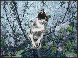 Climbing Cat by VioletDolphin