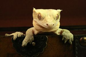 Most Offended Gecko by CatharsisJB