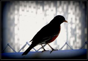 Silhouette Of A Robin by surrealistic-gloom