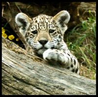 give me your hand ... by morho