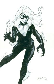 Black Cat 1 by themikehoffman