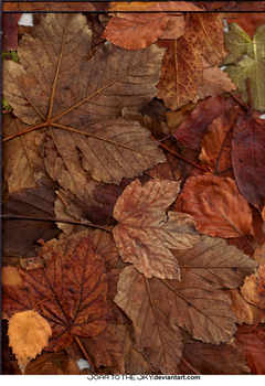 RESOURCE Autumn leaves 2 by SoarToTheSkyTexture
