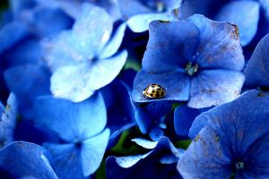 Coccinellidae Surprise by Applepixi