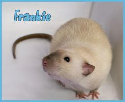 Frankie - Rat by TGRH