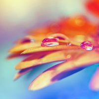 Colorful by 0paline