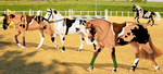 Show Jumping and Dressage Training by HazelPaskiStables