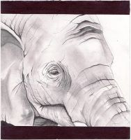 elephant by maklington