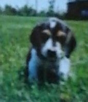 Pippin as a puppy blury by RadioactiveRays