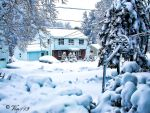 New England Snow by vin113