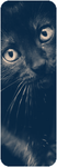 F2U Cat banner 2 by TheAwesomeTrina